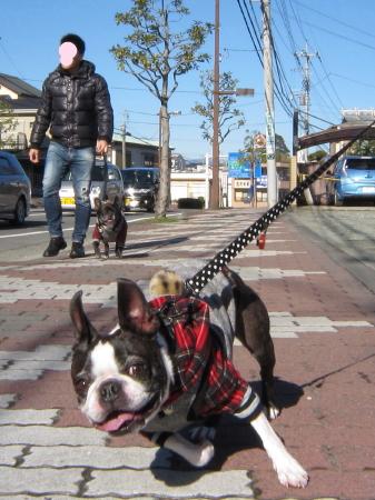 パンチとMARIの新年 初散歩
