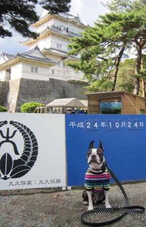 久しぶりに小田原城に行ったよ