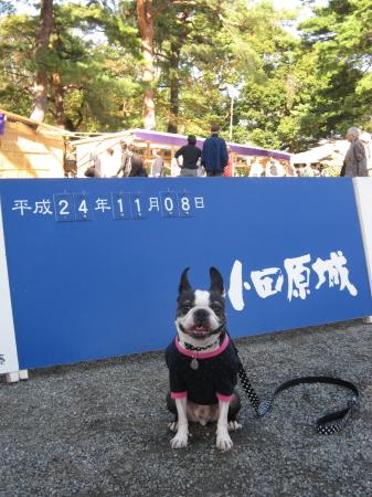 パンチとゴンちゃん  秋の遠足に行く!!