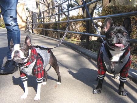 パンチとMARION の新年 初散歩