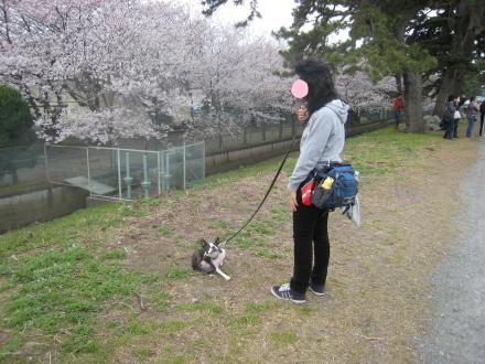 酒匂川&夜桜