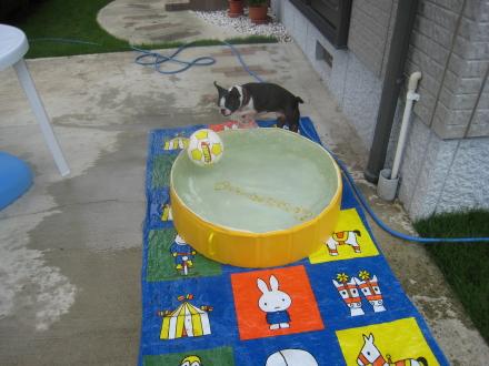 プール開き その1
