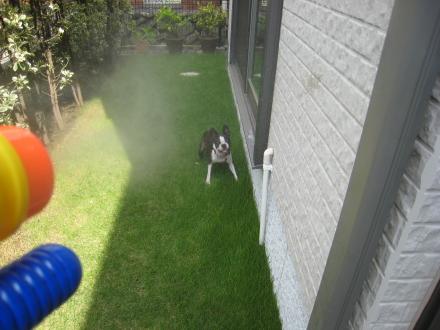 お庭で遊ぶ~♪