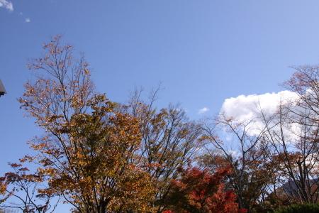 秋晴れに誘われて箱根に ♪~♪