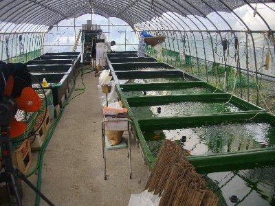 大澤飼育環境