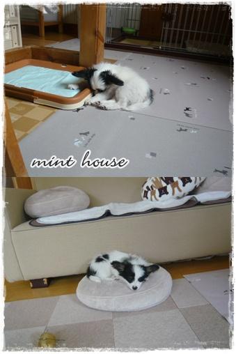 cats fc2