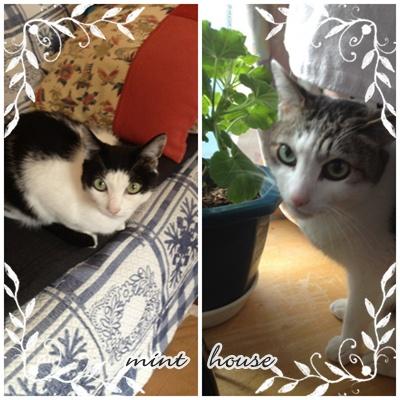 cats 太郎&あんず