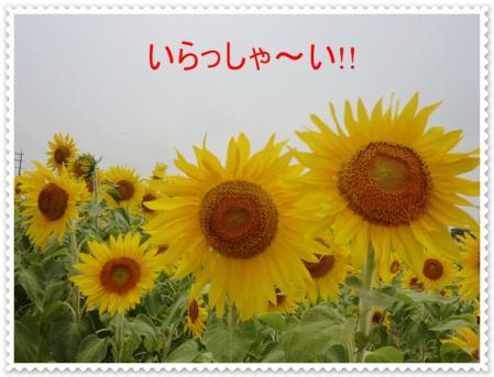 CIMG1083_20120731223222.jpg