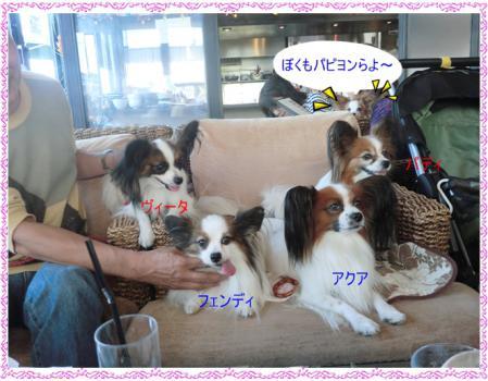 CIMG2390_20121023222456.jpg