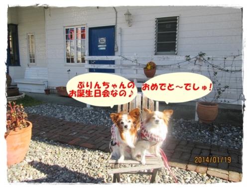 IMG_2214.jpg
