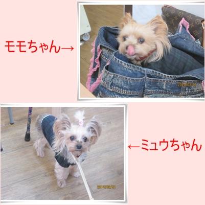 cats_20140204232007ea6.jpg