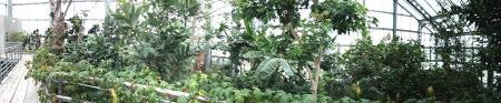 ジャングル_convert_20130514152314