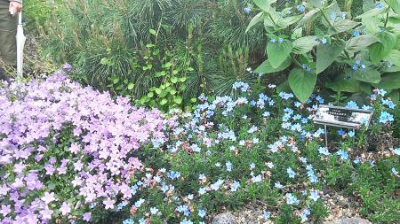 紫青_convert_20130514152423