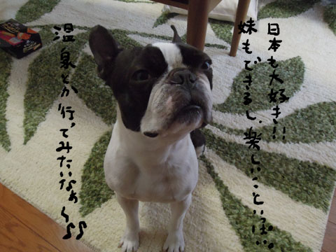 日本大好き