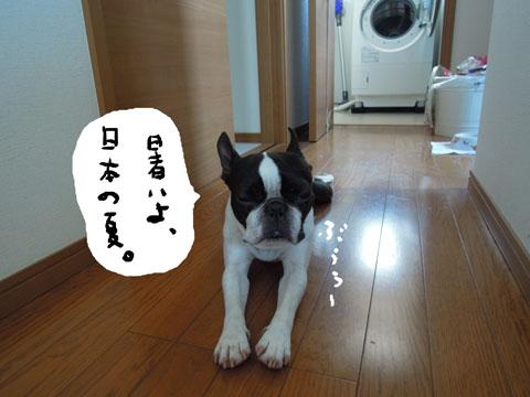 暑いよ、日本。