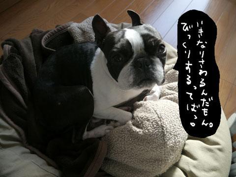 ikinari.jpg