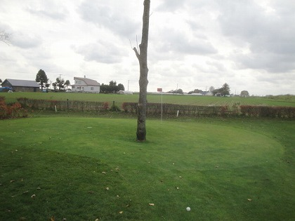 b4 長いうえに、グリーンの中に木