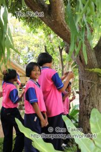 この記事「ヤオ ノイ島で写真の勉強会」の写真 (339-025)