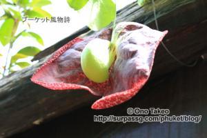 この記事「プーケットの花・・1」の写真 (358-023)
