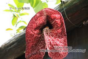 この記事「プーケットの花・・1」の写真 (358-026)