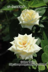 この記事「プーケットの花・・2」の写真 (358-037)
