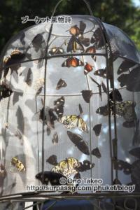この記事「プーケット チョウチョの森」の写真 (362-095)