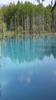 青い池 縦