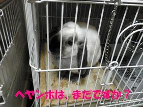 sakura 20130328 001
