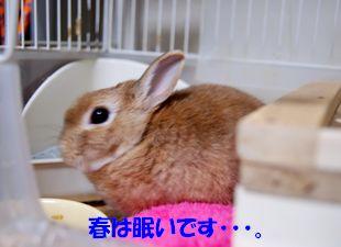 pig 20130329 001