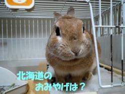 pig 20130424 001