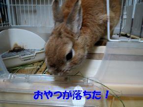 pig 20130425 001