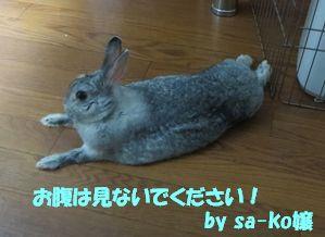 sa-ko 20130523 001