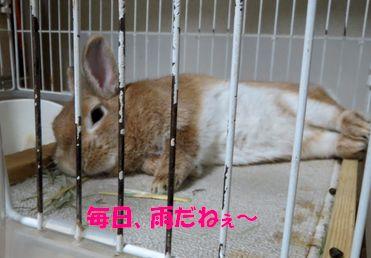 pig 20130530 001