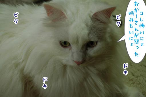 03_20120529185557.jpg