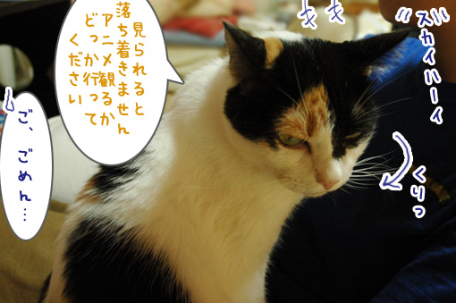 03_20121004133408.jpg