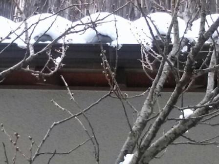 大雪の外2