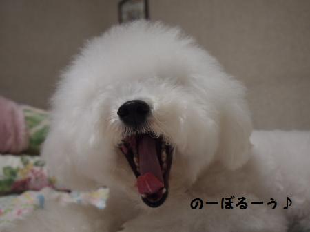 のーぼるー