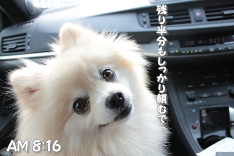 20130312-IMG_8998.jpg