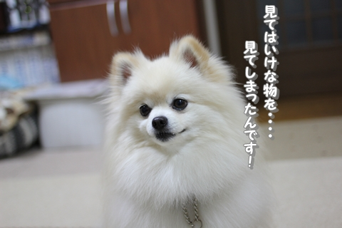 20130412-IMG_0914.jpg