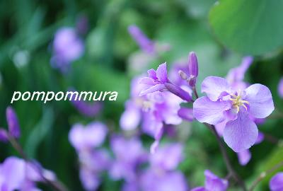 花の名前は?