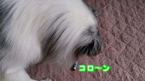 DSC_1374_convert_20140127071413.jpg