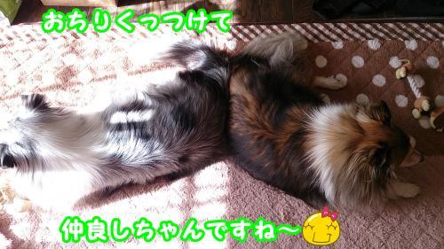 DSC_1532_convert_20140210102157.jpg