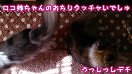 DSC_1536_convert_20140210102302.jpg