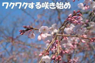 147_convert_20130330120358.jpg