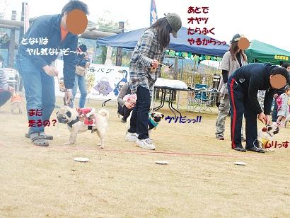 4月15日 東海パグオフ会と吉田公園 288
