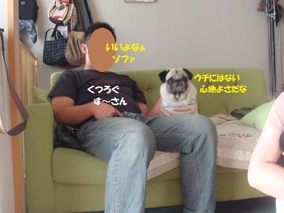 DSC00230_20121205043338.jpg