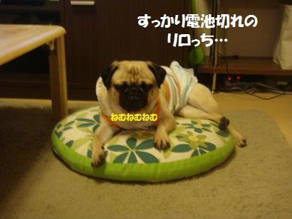 DSC00303_20121205050933.jpg