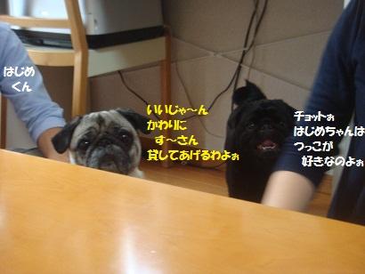 DSC00322_20121211210104.jpg