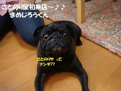 DSC00331_20120820211018.jpg
