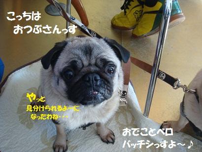 DSC00526_20120801192806.jpg